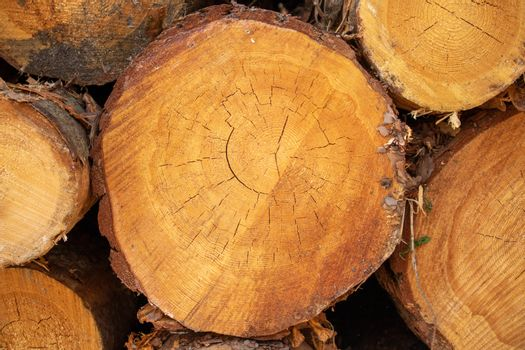 Natural sawn tree. The texture of the slice. Sawed and rings of tree life. Brown wood background.