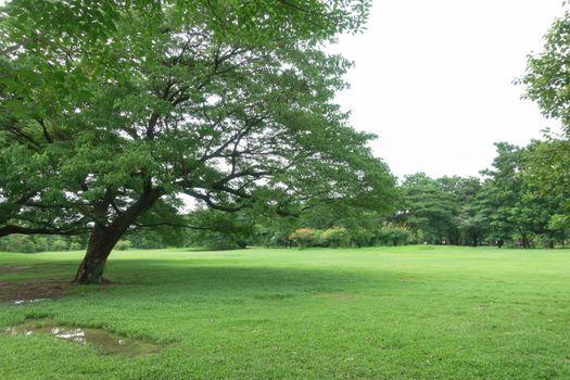 Big tree in park in sunny day