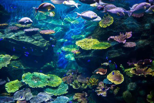Aquarium with colorful corel and fish
