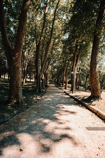 Path between the giant trees in the middle of the park