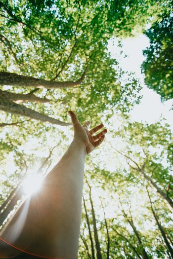 A male hand trying to reach the light in the peaks of the trees during a bright day