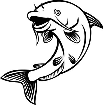 Cartoon style illustration of a blue catfish Ictalurus furcatus , North America's largest catfish species, jumping up on isolated white background done in black and white.