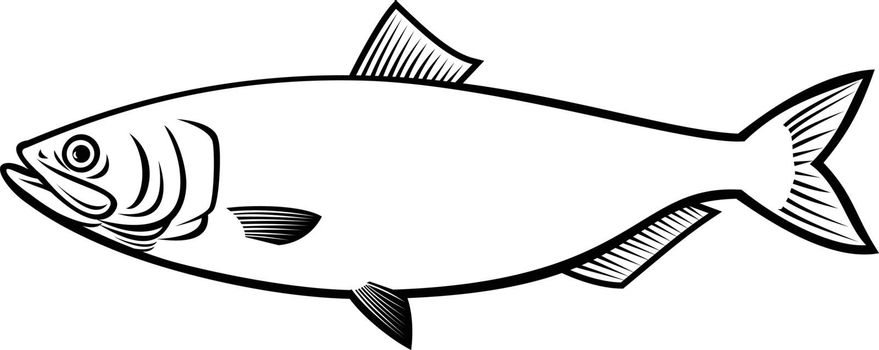 Stencil illustration of a blueback herring or blueback shad Alosa aestivalis, an anadromous species of herring from North America side view on isolated background done in black and white retro style.