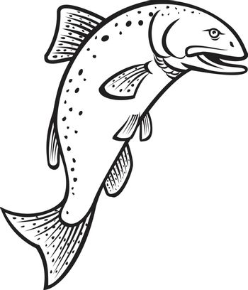 Cartoon style illustration of a Chinook salmon Oncorhynchus tshawytscha king salmon, Quinnat salmon, chrome hog, Tyee salmonon, jumping up on isolated background done in black and white.