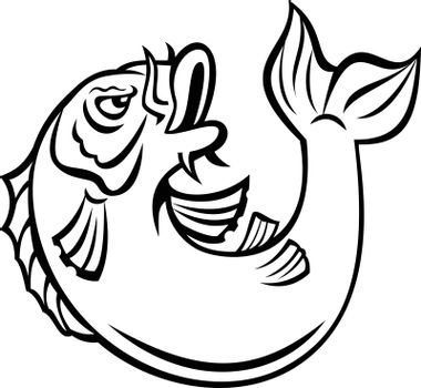 Cartoon style illustration of a Koi, jinli or nishikigoi fish, colored varieties of the Amur carp Cyprinus rubrofuscus, jumping up on isolated background done in black and white.