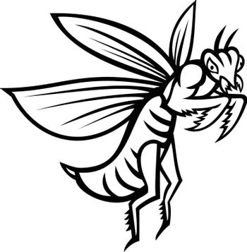 Mascot illustration of a praying mantis or mantis with forearms folded flying viewed from side on isolated background in retro black and white style.