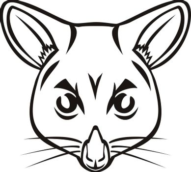 Mascot illustration of head of a common brushtail possum Trichosurus vulpecula, a nocturnal, semi-arboreal marsupial of the family Phalangeridae, native to Australia viewed from front in retro style.