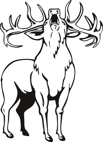 Stencil illustration of A red deer Cervus elaphus, one of the largest deer species, roaring viewed from front on isolated background done in black and white retro style.