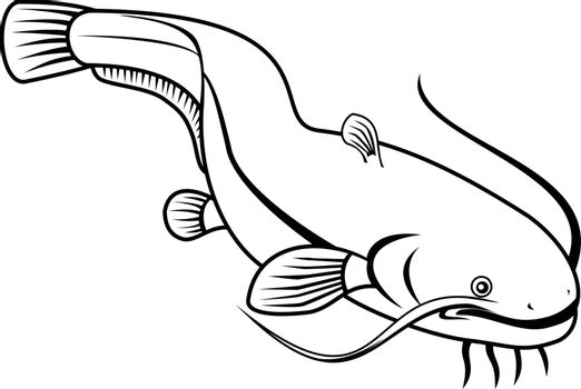 Retro style illustration of wels catfish also called sheatfish, a species of large catfish native to wide areas of central, southern and eastern Europe on isolated background done in black and white.