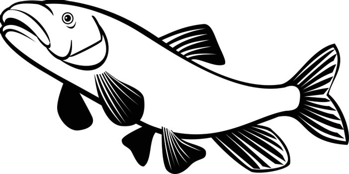 Retro style illustration of a shortnose sucker,  a rare species of fish in the family Catostomidae, the suckers, native to Oregon and California jumping on isolated background done in black and white.