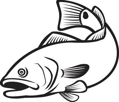 Illustration of a red drum, redfish, channel bass, puppy drum or spottail bass, a game fish found in the Atlantic Ocean from Florida to northern Mexico, jumping down in black and white retro style.