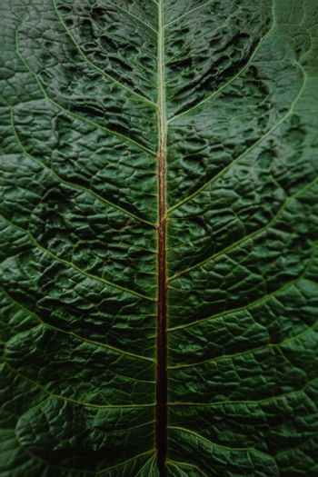 Super close up of a pattern in a leaf of a plant with super texture
