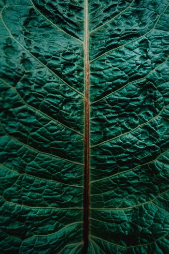 A super close up of a pattern in a leaf of a plant with super texture