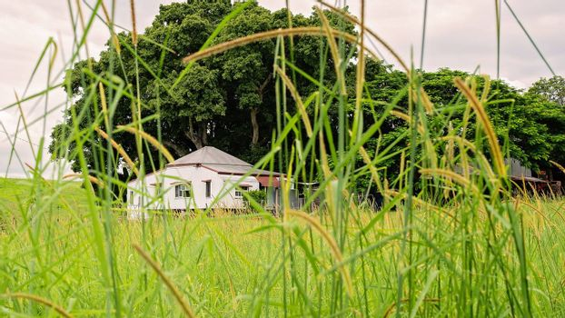 An old country home viewed through a field of thick green grass flourishing after rainfall