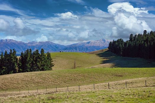 The rolling hills and pine forests of New Zealand with a background of snow capped mountain ranges under a cloudy blue sky