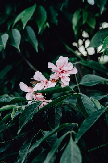 Pink flowers over a green background with dark tones and copy-space
