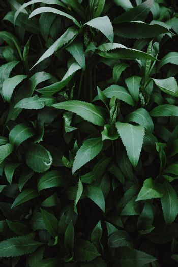 Vibrant green leaves wallpaper with dark shadows and copy-space