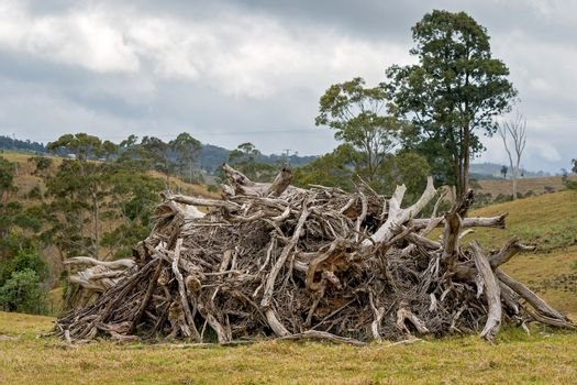 Uprooted Trees From Deforestation