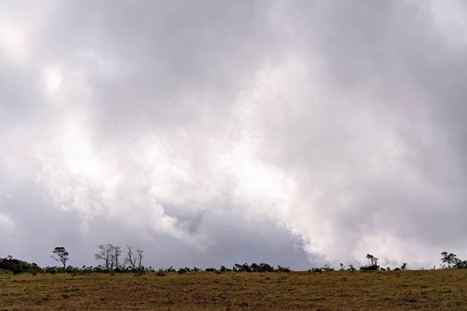 Dairy cows grazing on the horizon with gathering storm clouds in the background