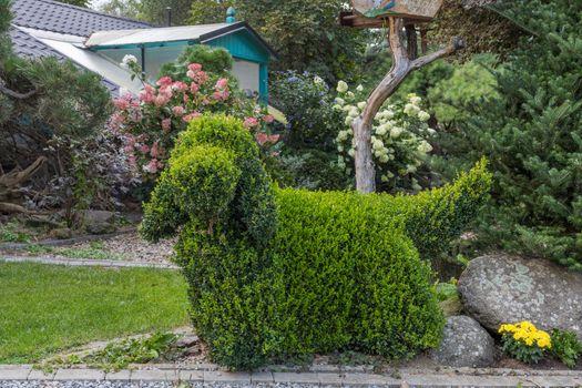 topiary garden bush cut into a dog shape, english cocker spaniel