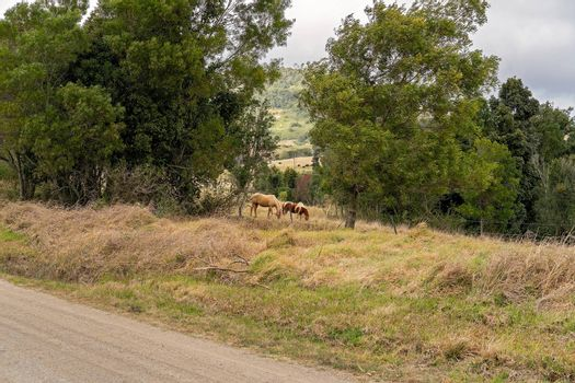Two horses grazing in a paddock by the side of a country dirt road