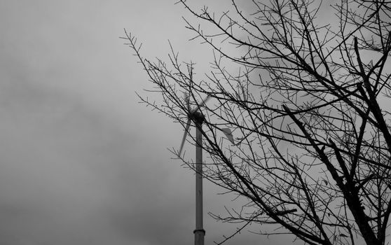 Dry big tree stands dead and windmill spinning in the back. Black and white style tone.