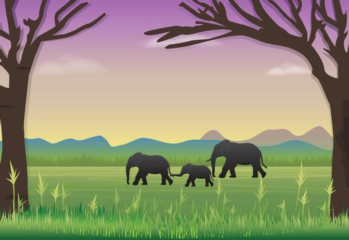 Elephants family in meadow. Nature landscape background