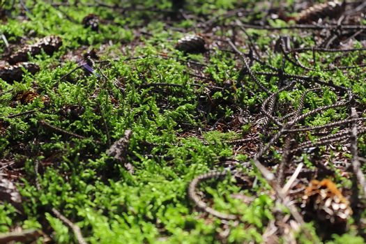 Detailed close up view on a forest ground texture with moss and