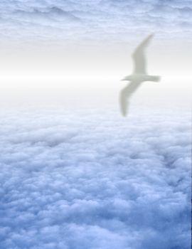 White Bird in Clouds. 3D rendering