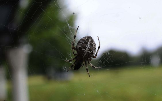 a spiderweb with the spider on it in nature at day