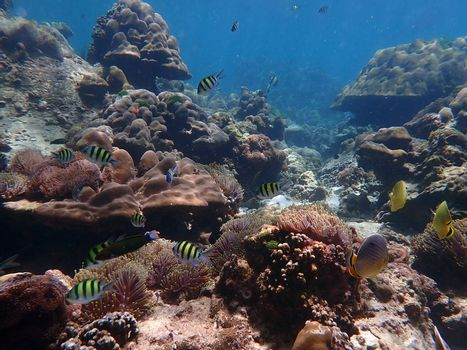 Coral reef with fish at Lipe Island, Andaman Sea, Indian Ocean, Thailand, nature photography