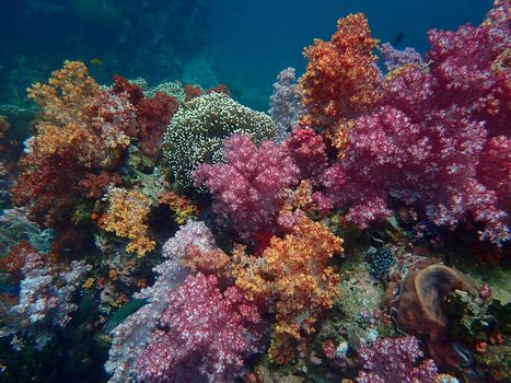Marine life under sea water, underwater landscape photography, colorful sea life, diving activity of water tourism