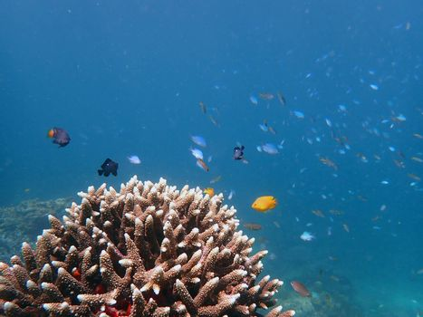 Group of fish with corals in sea, underwater landscape with sea life