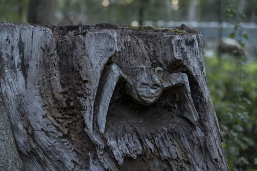 a bat cut into a tree trunk in the forest