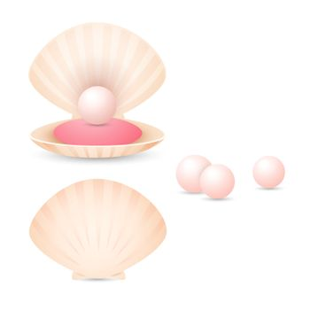 Light pink pearl in shell. Open and closed seashells with small pearls. Can be used for topics like jewelry, fashion, treasure