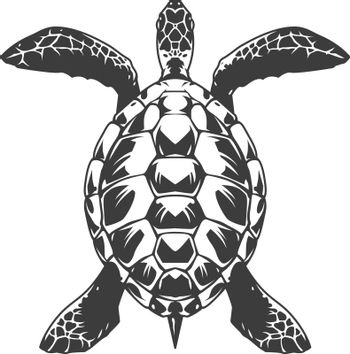Vintage turtle top view concept in monochrome style isolated vector illustration