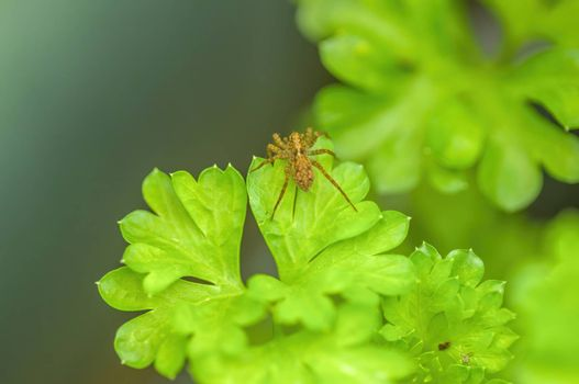 a Small spider insect on a plant in the meadows