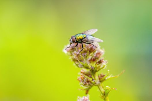 a Little fly insect on a plant in the meadows
