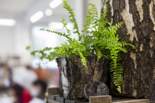 Bouquet of wildflowers in a bark vase, eco-friendly interior decoration concept