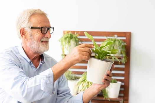 Senior retirement man is taking care of his small plant while relax at home