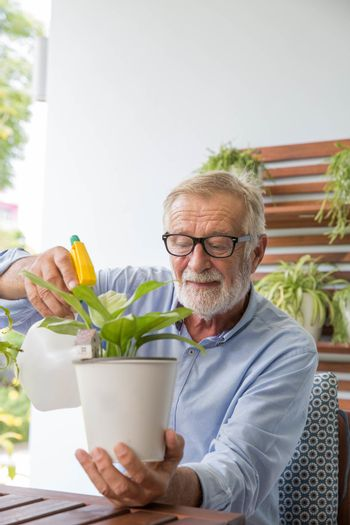 Senior retirement man is watering his small plant while relax at home