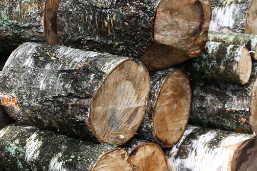 Freshly Sawn Wood