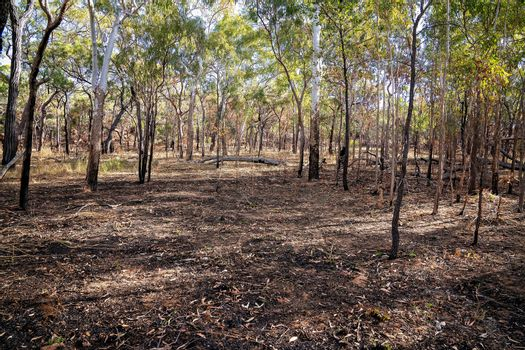 Aftermath Of A Controlled Fire In The Australian Bush