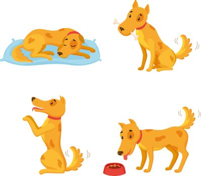 Dog in different states