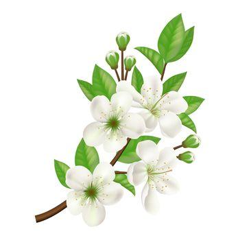 Blossoming Apple Tree Twig