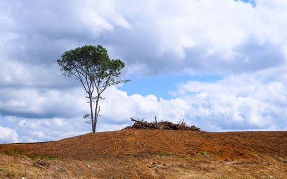 Lone Tree on a Bare Hill at a Construction Site