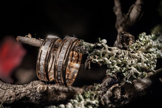 Two golden rings and branch on a studio background