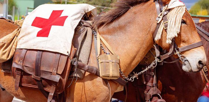 A First Aid Veteran Army Donkey