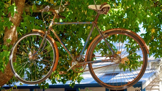An Old Rusty Bike Hanging In A Tree