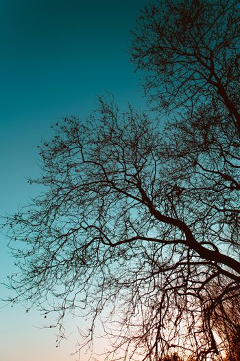 Trees silhouettes on the blue sky with red flares from the sunset